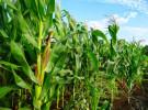 मकै खेतीमा यान्त्रिकीकरणको सकारात्मक नतिजा